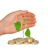 Hand protecting tree growing from pile of coins — Stock Photo