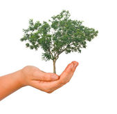 Palm with a tree — Stock Photo