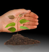 Tree seedling protected by hand — Stock Photo