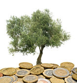 Olivovník pěstování z hromady mincí — Stock fotografie