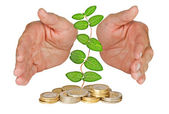 Hands protecting plant growing from pile of coins — Stock Photo
