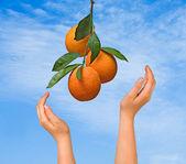 Oddział z pomarańczy — Zdjęcie stockowe