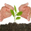 Tree seedling protected by hands — Stock Photo