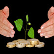 Sapling protected by hands — Stock Photo #9665708