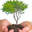 Tree in hands — Stock Photo #9666740