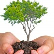 Tree in hands — Stockfoto #9666740