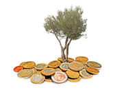 Olive tree growing from pile of coins — Stock Photo