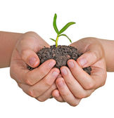 Seedling in hands — Foto de Stock