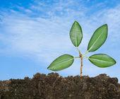 Tree shoot in soil — Stock Photo