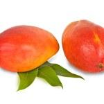 Two mangoes isolated on white background — Stock Photo