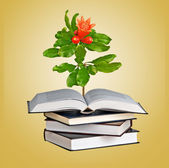 Flower growing from an open book — Stock Photo