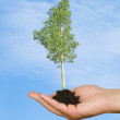 Tree in palm as a symbol of nature protection — Stock Photo #9685090