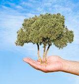 性質保護の記号としてヤシの木 — ストック写真
