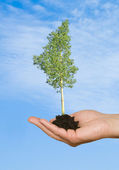 Tree in palm as a symbol of nature protection — Stock Photo