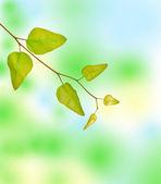 Tree branch — Foto de Stock
