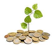 Дерево, растущее из стопки монет — Стоковое фото