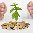 Mint growing from coins — Stock Photo
