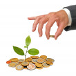 Stock Photo: Citrus sapling growing from coins
