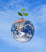 Tree on Earth as a symbol of pease and feeding the world — Stock Photo