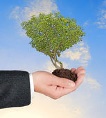 Drzewo w ręku — Zdjęcie stockowe