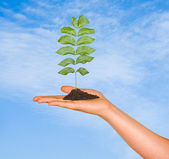 A sapling in hand as a symbol of nature protection — Stock Photo