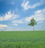Tree in field — Stock fotografie