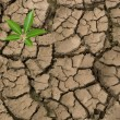 Seedling growing from barren land — Stock Photo