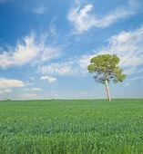 Tree at Field — Stock Photo