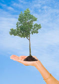 Tree in hand as a symbol of nature protection — Stock Photo