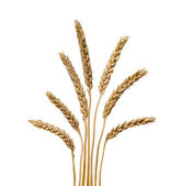 Wheat isolated on white background — Stock Photo