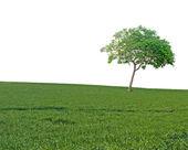 Tree on field — Stock Photo