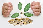 Palmy, ochrona growng drzewo ze stosu monet — Zdjęcie stockowe
