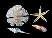 Coral, starfish, and seashells — Stock Photo