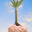 Stock Photo: Palm tree in hands as symbol of nature potection