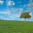 Tree in field — Stock Photo