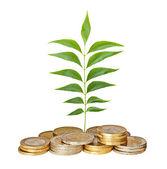Саженец, растущих из кучу монет — Стоковое фото