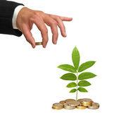 Árbol crece de monedas — Foto de Stock