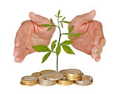 Seedling protectrd by hands — Stock Photo