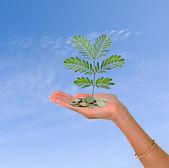 Palm z drzewa rosnące z stos monet — Zdjęcie stockowe