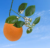 Orange and flowers — Stock Photo