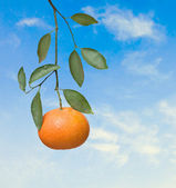 Tangerine on sky background — Stock Photo