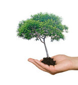 Tree in hands as a symbol of nature potection — Stock Photo