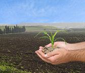 農業の贈り物として提示するトウモロコシの農夫を撃つ — ストック写真