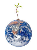 Tree on Earth as a symbol of peace and feeding the world.Element — Stock Photo