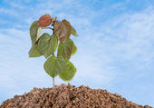 Sapling growing from soil — Stock Photo