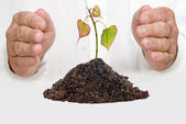 Tree shoot protected by hands as a symbol of nature potection — Stock Photo