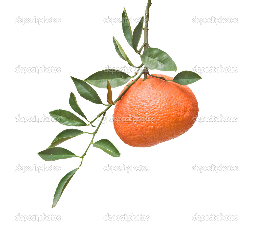 Tangerine on branch — Stock Photo #9738920