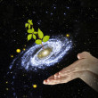 Plant at center of galaxy.Elements of this image furnished by NA - Stock Photo