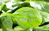 Verse spinazie bladeren — Foto de Stock