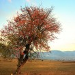Stock Photo: Red single tree